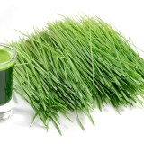 wheatgrass_shot